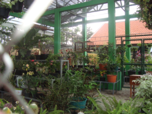 collection of beautiful plants Greenhouse SMANPAITON